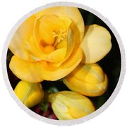 Yellow Crocus Closeup Round Beach Towel