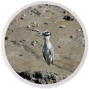 Yellow-crowned Night-heron Round Beach Towel