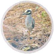 Yellow Crowned Night Heron Along The Tidal Creek Round Beach Towel