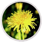Yellow Dandelion Flower Round Beach Towel