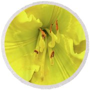 Yellow Daylily Round Beach Towel