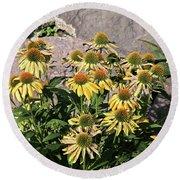 Yellow Echinacea, Straw Flowers Gray Stone Background 2 9132017  Round Beach Towel