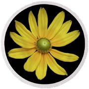 Yellow Eyed Daisy In Black Round Beach Towel