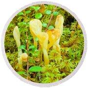 Yellow Fairy Fan Mushrooms Spathularia Flavida Round Beach Towel