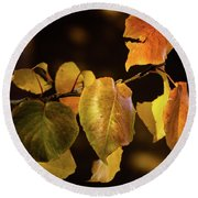 Yellow Fall Leaves Round Beach Towel