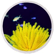 Yellow Feather Star Round Beach Towel