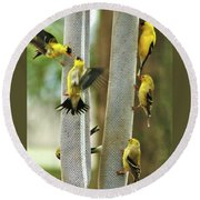Yellow Finch Feeding Frenzy Round Beach Towel
