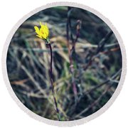 Yellow Flower In Dry Autumn Grass Round Beach Towel