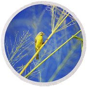 Yellow Fronted Canary Round Beach Towel