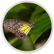 Yellow Glassy Tiger Butterfly Round Beach Towel