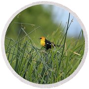 Yellow-headed Blackbird Round Beach Towel