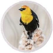 Yellow Headed Blackbird #4 Round Beach Towel