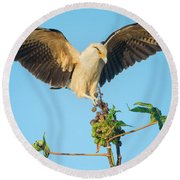 Yellow-headed Caracara Milvago Round Beach Towel