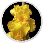 Yellow Iris Flower Still Life Round Beach Towel