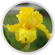 Yellow Iris Flowers Art Prints Cards Irises Summer Garden Landscape Round Beach Towel