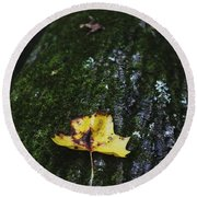 Yellow Leaf On Mossy Tree Round Beach Towel