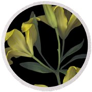 Yellow Lily On Black Round Beach Towel