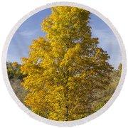 Yellow Maple Tree 1 Round Beach Towel