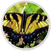 Yellow Monarch Butterfly On Milkweed #2 Round Beach Towel