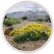 Yellow Mountain Blooms Round Beach Towel by Margaret Pitcher