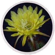 Yellow Night Blooming Cactus  Round Beach Towel