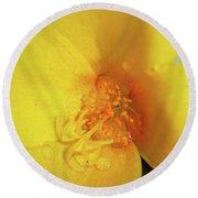 Yellow Poppy With Rain Round Beach Towel