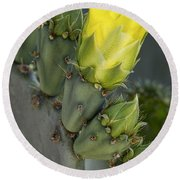 Yellow Prickly Pear Cactus Bloom Round Beach Towel