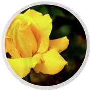 Yellow Rose - After The Rain Round Beach Towel