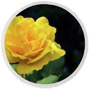 Yellow Rose - Full Bloom Round Beach Towel