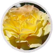 Yellow Rose Sunlit Summer Roses Flowers Art Prints Baslee Troutman Round Beach Towel