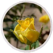 Yellow Rose With Ants Round Beach Towel
