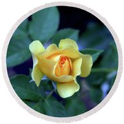 Yellow Rose With Purple Contrast 0357 H_2 Round Beach Towel