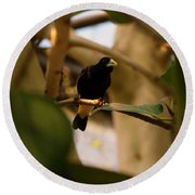 Yellow-rumped Cacique 3 Round Beach Towel