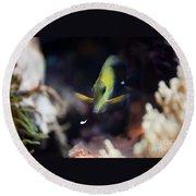 Yellow Spotted Aquarium Fish Round Beach Towel