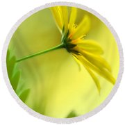Yellow Spring Daisy Abstract By Kaye Menner Round Beach Towel