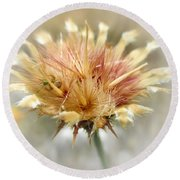 Yellow Star Thistle Round Beach Towel