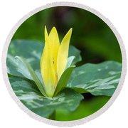 Yellow Trillium Flower Trillium Luteum Round Beach Towel