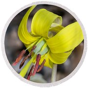 Yellow Trout Lily Round Beach Towel