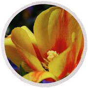 Yellow Tulip Blossom Streaked  With Red In The Spring Round Beach Towel