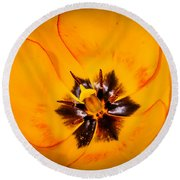 Yellow Tulip - Close Up Round Beach Towel