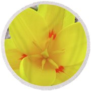 Yellow Tulip Flower Spring Flowers Floral Art Prints Round Beach Towel