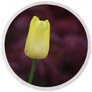 Yellow Tulip Perfection Ready To Blossom Round Beach Towel