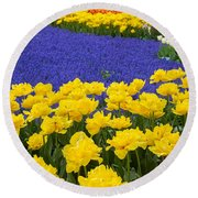 Yellow Tulips And Blue Muscari In Dutch Garden Round Beach Towel