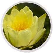 Yellow Water Lilly Round Beach Towel