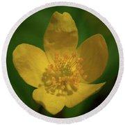 Yellow Wood Anemone 1 Round Beach Towel