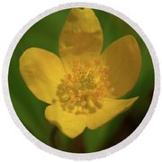 Yellow Wood Anemone 2 Round Beach Towel
