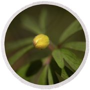 Yellow Wood Anemone 4 Round Beach Towel