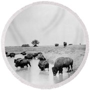 Yellowstone: Bison, C1905 Round Beach Towel