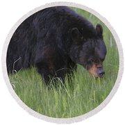 Yellowstone Black Bear Grazing Round Beach Towel