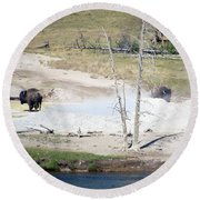 Yellowstone Park Bisons In August Round Beach Towel